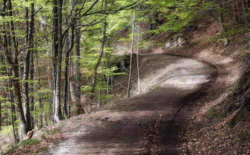 Chemin Vosgien