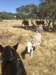 Trail Ride with Sunsmart XI – Red Moon Sanctuary, Redmond, Western Australia