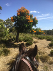 Trail Ride with Sunsmart VI – Red Moon Sanctuary, Redmond, Western Australia