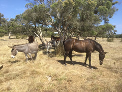 Trail Ride with Sunsmart XV – Red Moon Sanctuary, Redmond, Western Australia