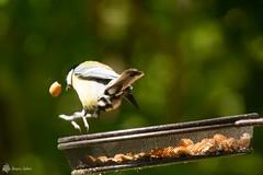 Zut, j'ai perdu ma cacahuète..jpg - Photo of Courcelles-en-Bassée