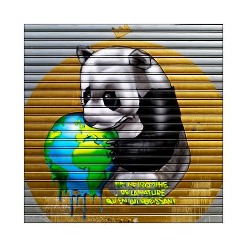 Bad Panda !