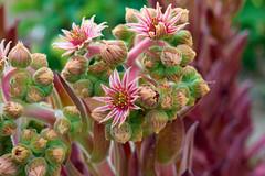 Flower 240