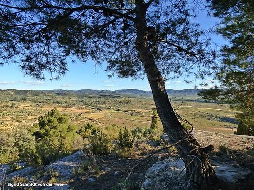 Mirant cap a la Serra de La Ginabrosa