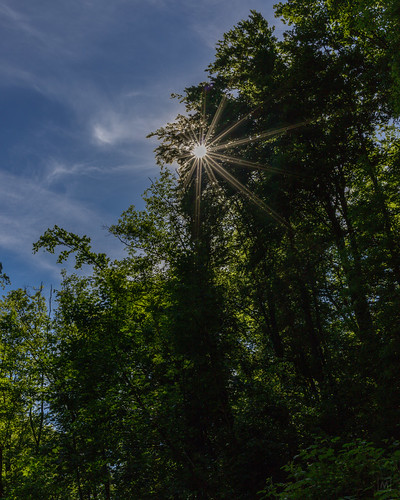 Sunstar in the woods