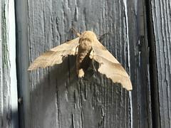 Papillon_01 - Photo of Pierrefeu-du-Var