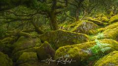 Dartmoor Highlights