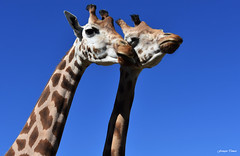 Cou cou au Zoo de Mervent !!!