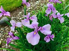 June Bloom