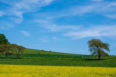 Spring Slices - Photo of La Neuville-en-Beine