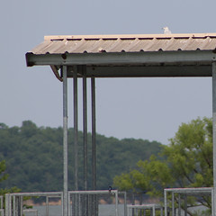 Gull on the roof | Clinton Lake | June 2, 2019