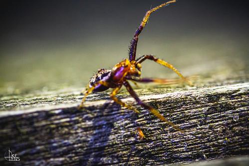 Samara the Spider
