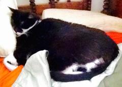 Paddington settles down on a pillow... IMG_3167