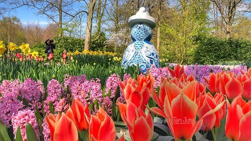 Proud Mary, Keukenhof Gardens, Lisse, Netherlands - 2994