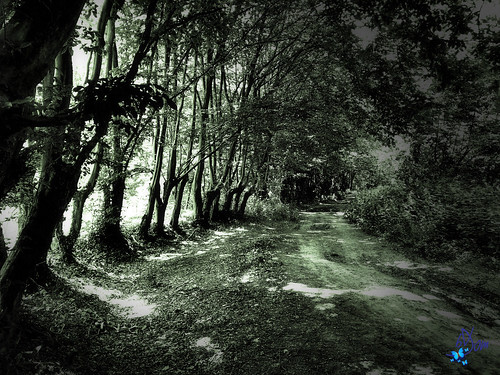 2019 - randonnée - Jollain-Merlin