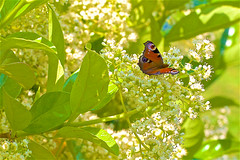 Ecosystème dans mon jardin - Photo of Daignac