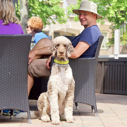 German tourist, French Poodle