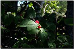 Natura naturalment il·luminada, Eina (l'Alta Cerdanya)