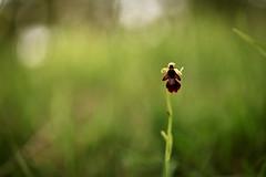 Une pauvre petite mouche solitaire