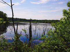 Wasserfläche im Tarbeker Moor | 2. Juni 2019 | Schleswig-Holstein - Germany