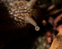 Snails Eye looking at me - Photo of Courry