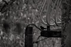 Black and White Bird - Photo of Courry