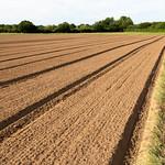 Geometric field near Wisley   Woking to Wisley and back-12