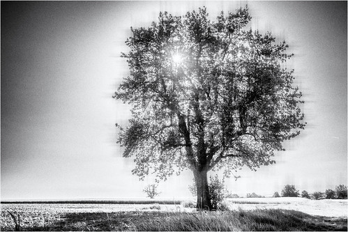 Tree in a Grid...