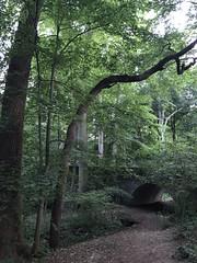 Path and bridge, evening at Tregaron Conservancy, Cleveland Park, Washington, D.C.