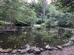 Lily pond, evening at Tregaron Conservancy, Cleveland Park, Washington, D.C.
