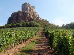 Vigne sous la roche de Solutré