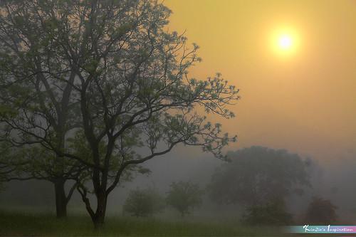 Sun Just UP 😊 *A Beautiful Nature*