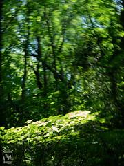 forêt floue