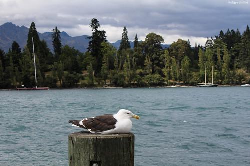 Pause au bord du lac Wakatipu