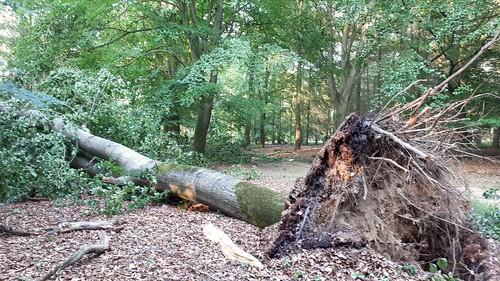 Storm damage, Twikeler bos
