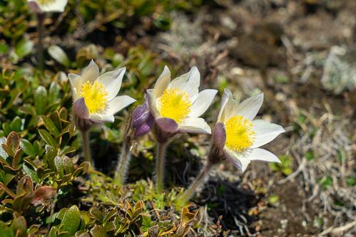 Berninapass: Wonderful trio (2/3)