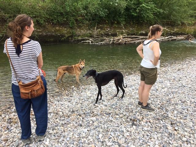 05.06.2019, Familienhundegruppen, Baden anstelle von trainieren
