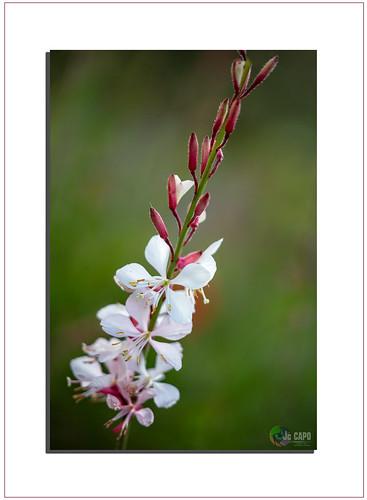 On ne force pas une fleur à s'ouvrir, mais on peut favoriser son éclosion en ne lui cachant pas le soleil.