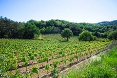 190601 vines 46 - Photo of Preixan