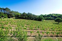 190601 vines 50 - Photo of Preixan