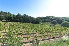190601 vines 54 - Photo of Preixan