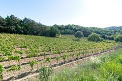 190601 vines 59 - Photo of Preixan