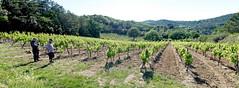 190601 vines 62 - Photo of Preixan