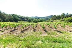 190601 vines 64 - Photo of Preixan