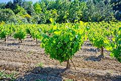190601 vines 24 - Photo of Preixan