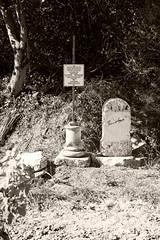 190601 vines 44 - Photo of Preixan