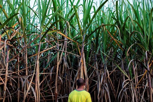 Frente a retrocessos, organizações e intelectuais se unem em debate agrário