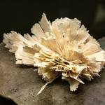 Kwarts - Terra Mineralia