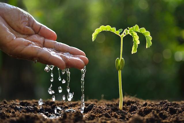 Entenda por que os agrotóxicos estão além da lavoura
