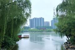 Xing Qing Palace Park 兴庆宫